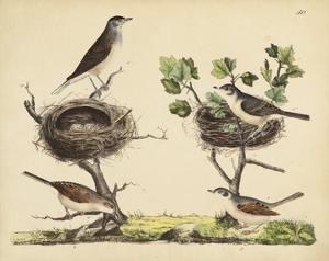 Wrens, Warblers & Nests I by Friedrich Strack