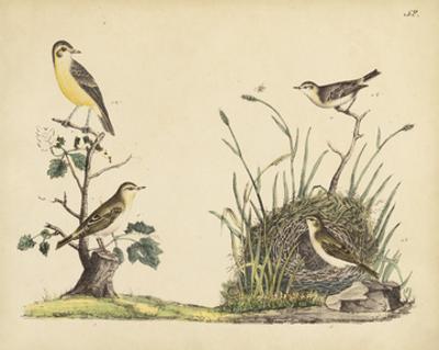Wrens, Warblers & Nests II