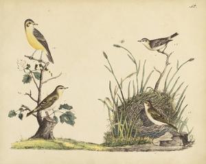 Wrens, Warblers & Nests II by Friedrich Strack