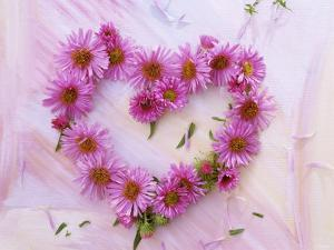 Heart of Pink Asters by Friedrich Strauss