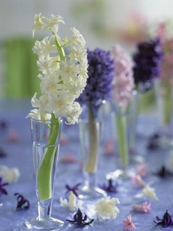 Hyacinths in Glasses as Table Decoration by Friedrich Strauss