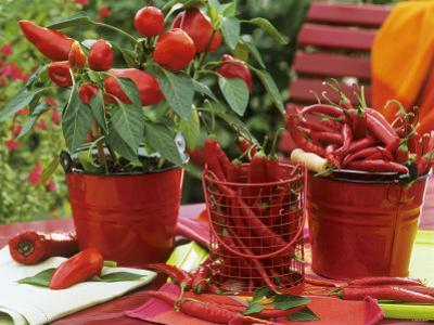 Peppers and Chili Peppers in Red Enamel Buckets by Friedrich Strauss