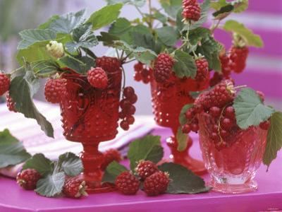 Small Bouquets of Raspberries and Redcurrants by Friedrich Strauss