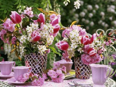 Vases of Pink Tulips and Blossom on Table Laid for Coffee by Friedrich Strauss
