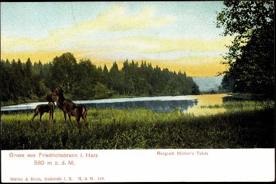 Friedrichsbrunn I. Harz, Bergrath Müller's Teich, Hirsche--Giclee Print