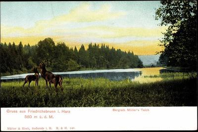 https://imgc.artprintimages.com/img/print/friedrichsbrunn-i-harz-bergrath-mueller-s-teich-hirsche_u-l-posihs0.jpg?p=0