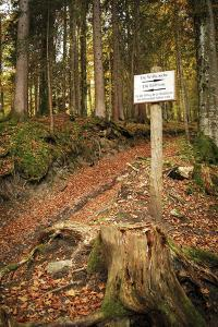 Earth Trench, Nature Trail, Forest, Grainau, Upper Bavaria by Frina
