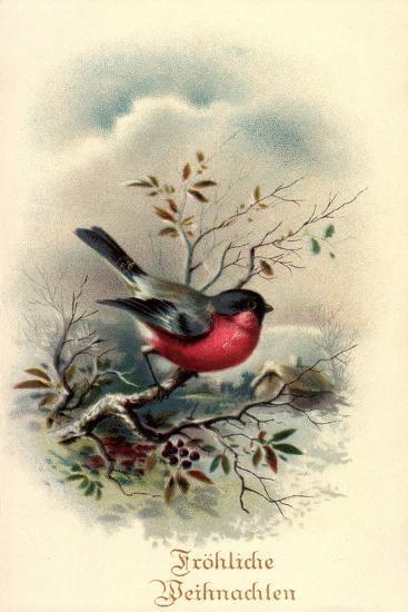 Fröhliche Weihnachten, Rotkehlchen, Erithacus Rubecula--Giclee Print