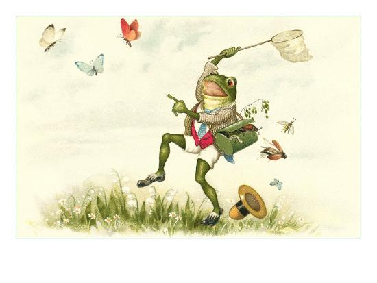 Frog Lepidopterist--Art Print