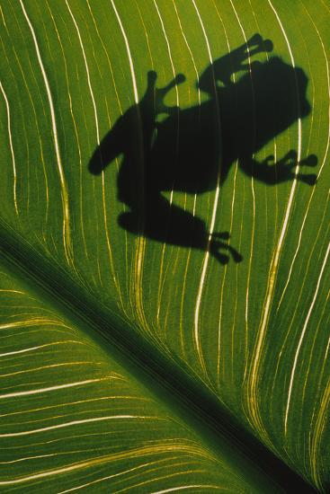 Frog Silhouetted on Leaf-DLILLC-Photographic Print