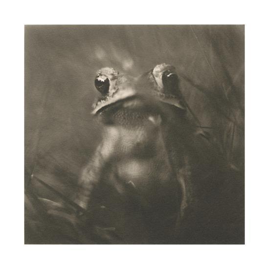 Frog-David Johndrow-Photographic Print