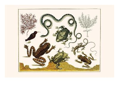 Frogs, Lizards, Snakes, Birds and Plants-Albertus Seba-Art Print
