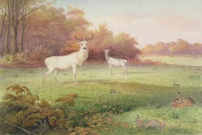 From 'The Knowsley Menagerie', October 24th 1850-Joseph Wolf-Giclee Print