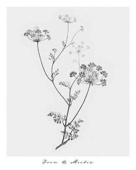 From the Meadow-Maria Mendez-Giclee Print