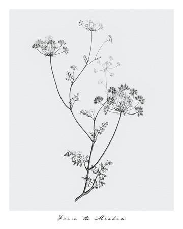 https://imgc.artprintimages.com/img/print/from-the-meadow_u-l-f908k60.jpg?p=0