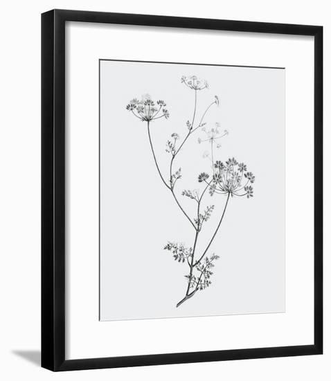 From the Meadow-Maria Mendez-Framed Giclee Print