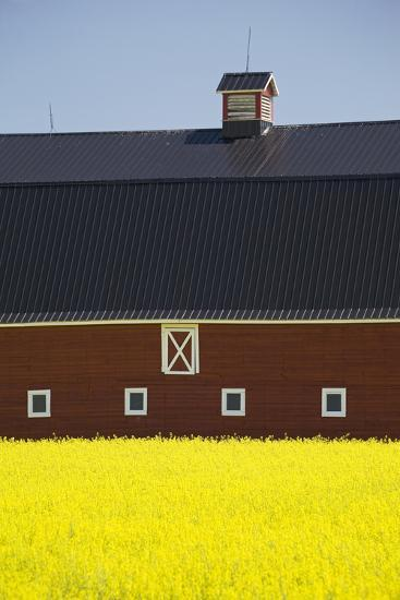 Front of a Red Barn in a Flowering Canola Field with Blue Sky South of High River; Alberta Canada-Design Pics Inc-Photographic Print