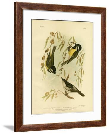 Frontal Shrike-Tit or Crested Shrike-Tit, 1891-Gracius Broinowski-Framed Giclee Print