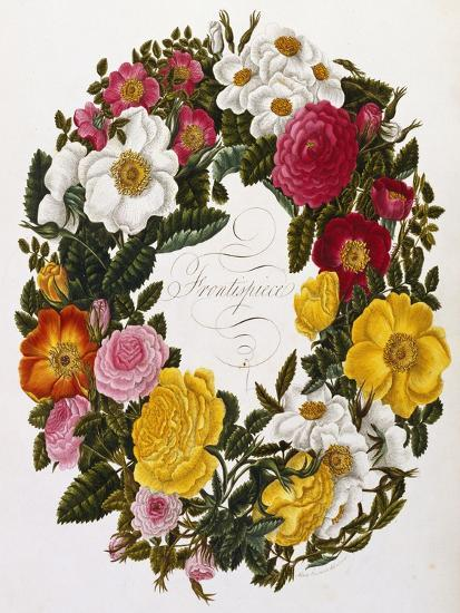 Frontispiece of Roses, Collection of Roses from Nature-Mary Lawrence-Giclee Print