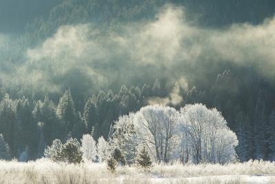 Frost Covered Trees in Grand Teton National Park-Charlie James-Photographic Print