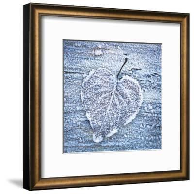 Frost on Alder Leaves 5-Don Paulson-Framed Giclee Print