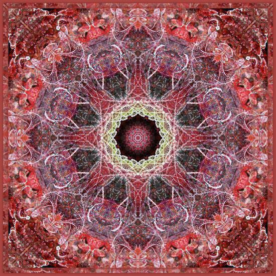 Frosted Leafes in the Forest Mandala Red Toned-Alaya Gadeh-Photographic Print
