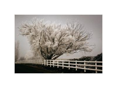 https://imgc.artprintimages.com/img/print/frosted-tree-and-fence_u-l-f4e5mb0.jpg?p=0