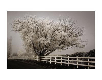 https://imgc.artprintimages.com/img/print/frosted-tree-fence_u-l-f8cu3g0.jpg?p=0