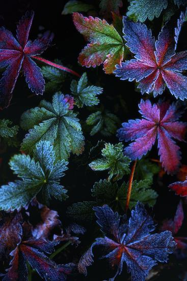 Frosty Fall-Darren White Photography-Photographic Print