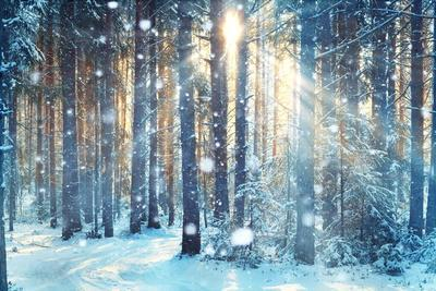https://imgc.artprintimages.com/img/print/frosty-winter-landscape-in-snowy-forest_u-l-q1a2fhs0.jpg?p=0