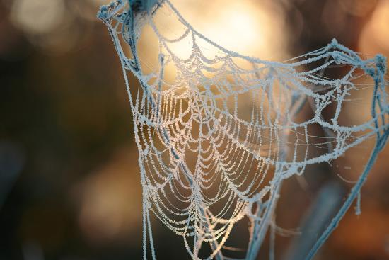 Frozen October Morning Cobwebs.- Stone36-Photographic Print
