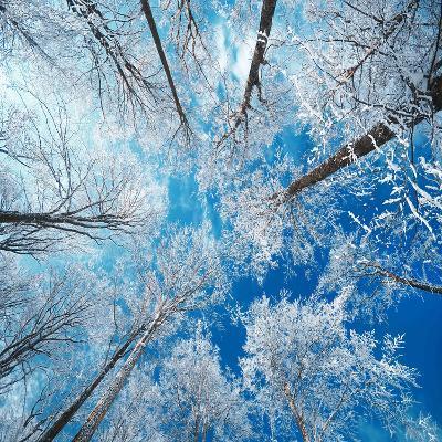 Frozen Sky-Philippe Sainte-Laudy-Premium Photographic Print