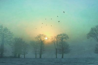 Frozen-Viviane Fedieu Daniel-Premium Photographic Print