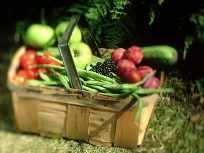 Fruit and Vegetables from the Garden, Kent-David Tipling-Photographic Print