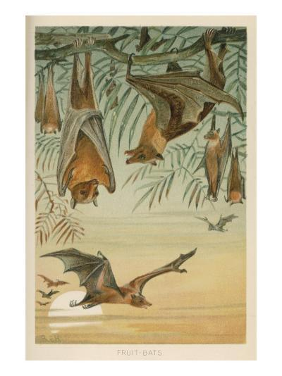 Fruit Bats Hanging in Trees and Flying During a Full Moon--Giclee Print