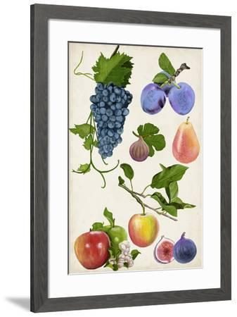 Fruit Collection II-Naomi McCavitt-Framed Giclee Print
