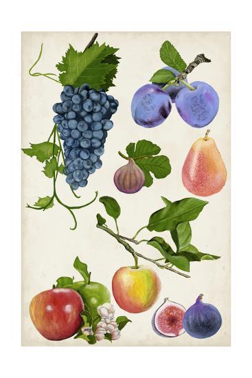 Fruit Collection II-Naomi McCavitt-Art Print