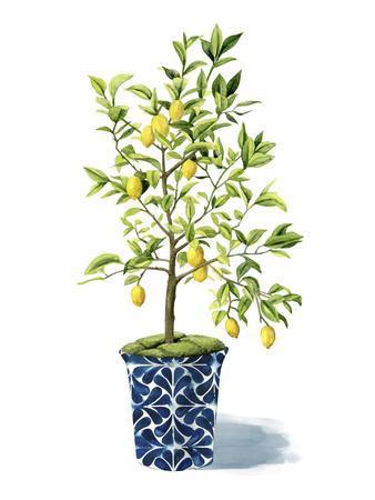 https://imgc.artprintimages.com/img/print/fruit-tree-ii_u-l-q19zjts0.jpg?p=0