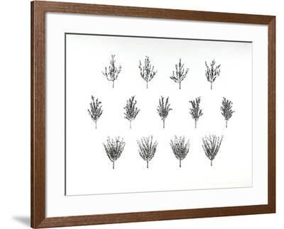 Fruit Trees from the A.I.R. Women's Portfolio-Patsy Norvell-Framed Collectable Print