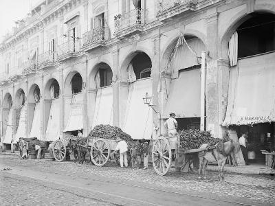 Fruit Wagons Unloading at Market, Havana, Cuba--Photo