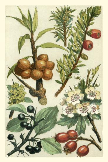 Fruits and Foliage III-Vision Studio-Art Print