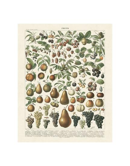 Fruits II-Adolphe Millot-Art Print