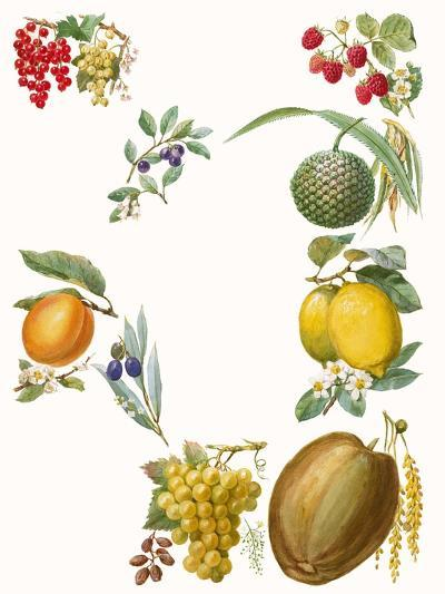 Fruits-English School-Giclee Print