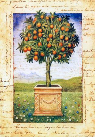 https://imgc.artprintimages.com/img/print/fruti-mediterranei-i_u-l-f4eq520.jpg?p=0