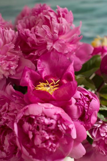 Fuchsia Peonies II-Karyn Millet-Photo