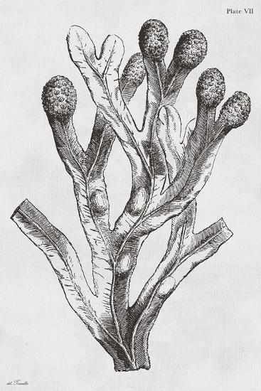 Fucus vesiculosus - Noir-Maria Mendez-Art Print
