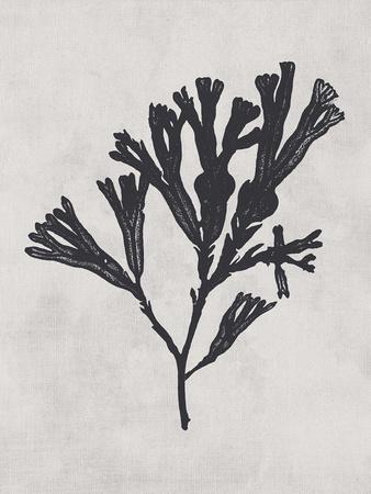 https://imgc.artprintimages.com/img/print/fucus-vesiculosus-noir_u-l-f971fw0.jpg?p=0