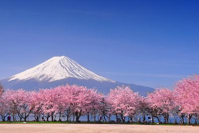 Fuji and Sakura-Peerapat Tandavanitj-Photographic Print