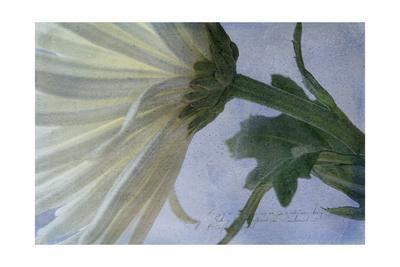 https://imgc.artprintimages.com/img/print/fuji-green_u-l-pyklhp0.jpg?p=0