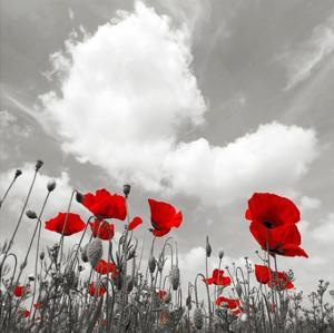 Papaveri e nuvole by Fulvio Ferrua